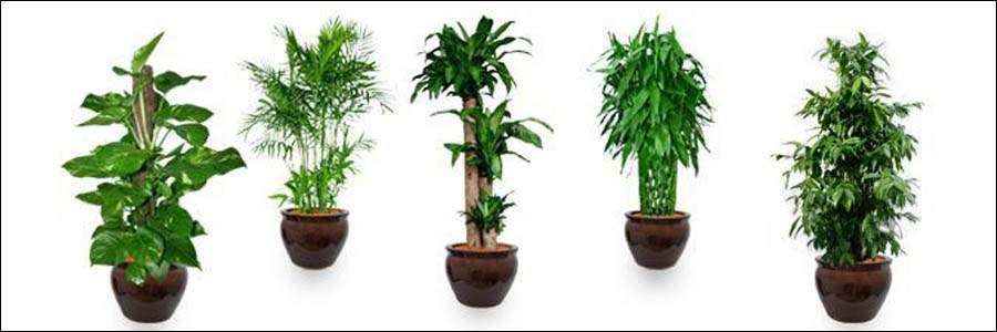 Plants indoor